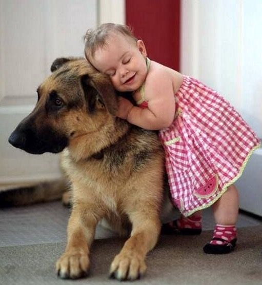 Image result for german shepherd dog, hugging a child
