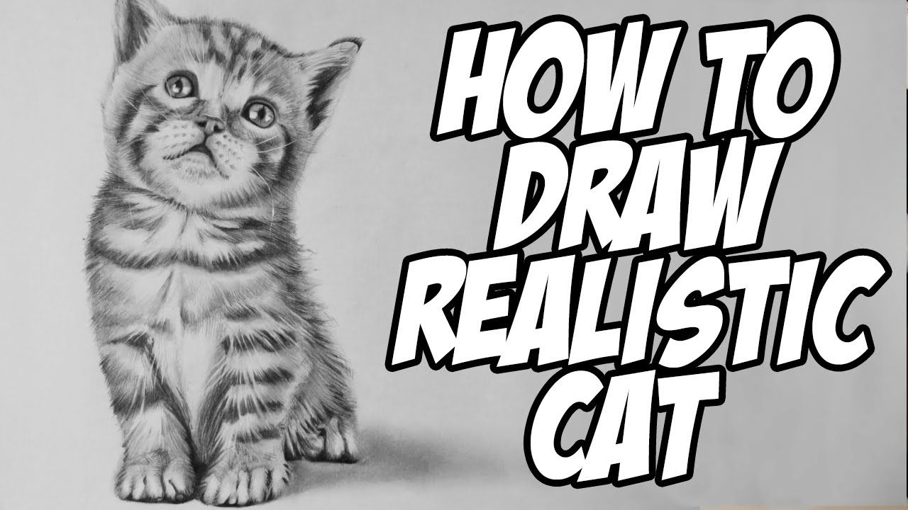 How To Draw A Realistic Baby Kitten Drawing Animal Hair Kitten Drawing Animal Drawings Cat Drawing Tutorial