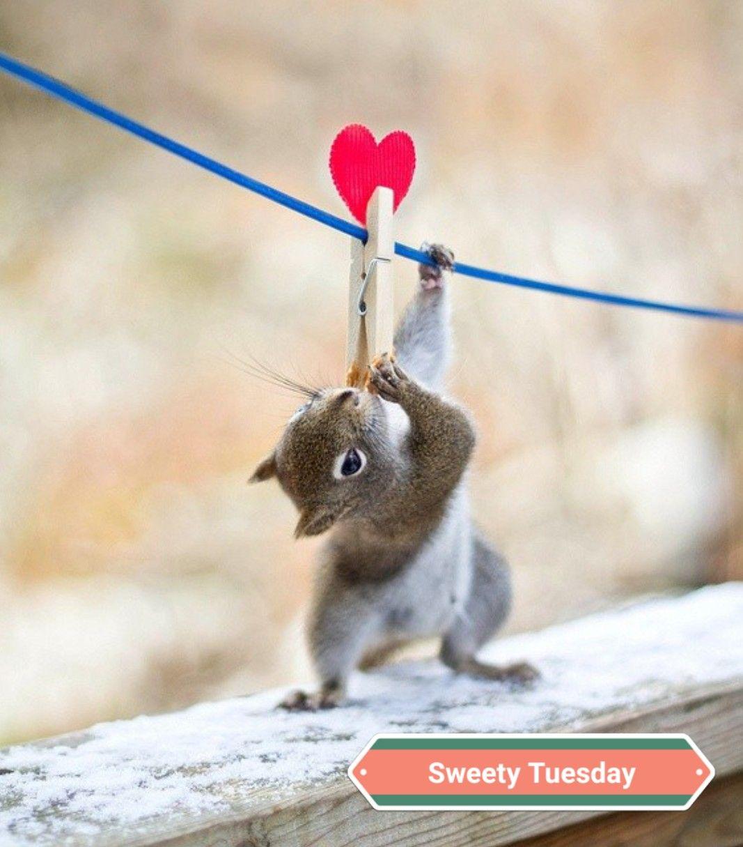Squirrel กระรอก ส ตว น าร ก