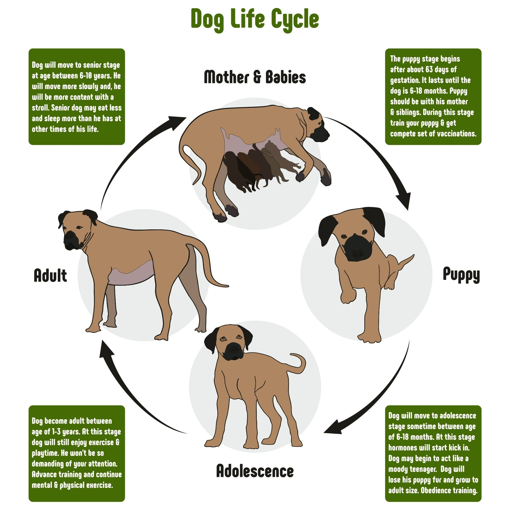 How Long Do Dogs Live Explaining The Life Expectancy Of Dogs