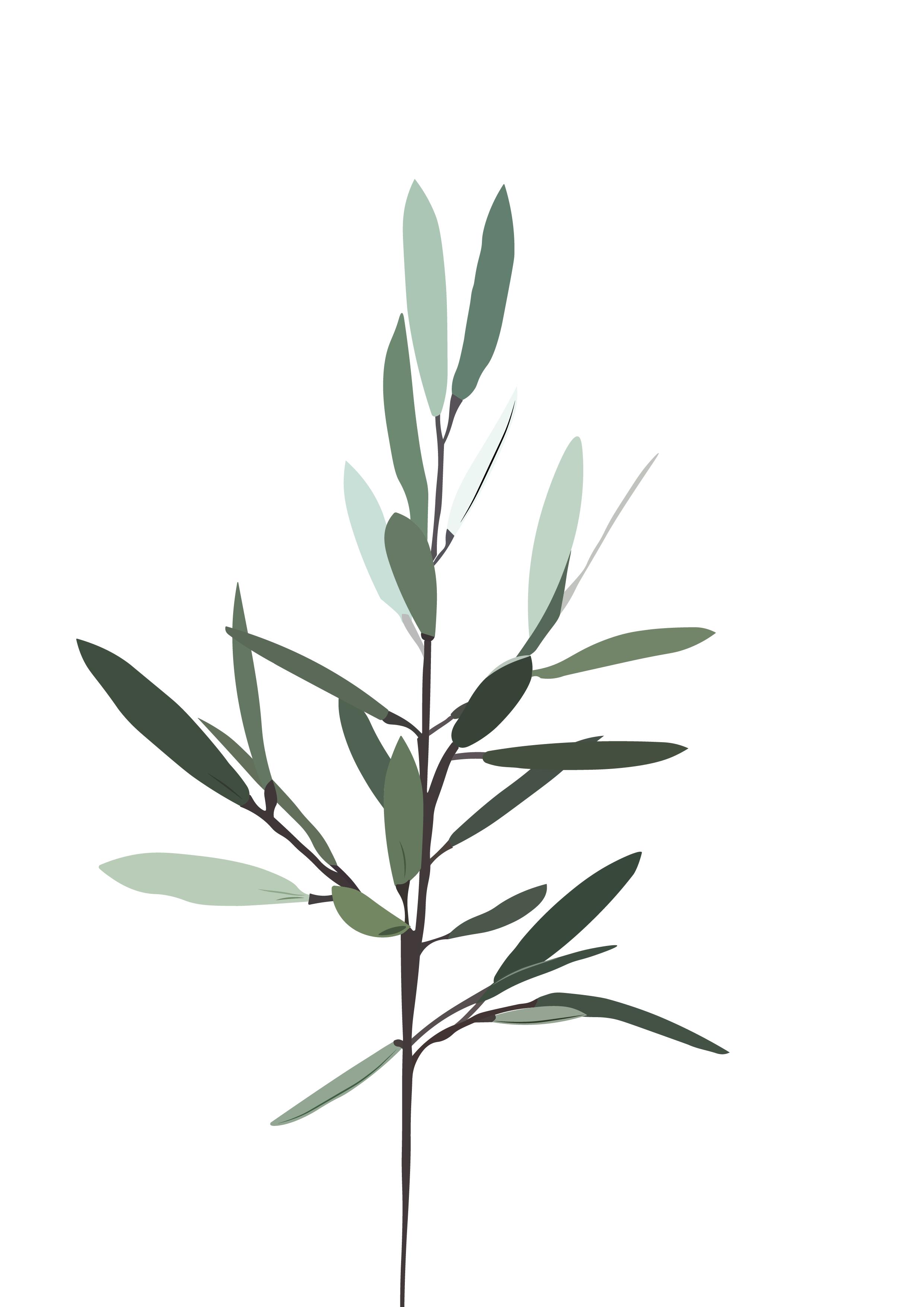 Olive Branch Olive Branch Meaning Garden Of Gethsemane Olive Branch