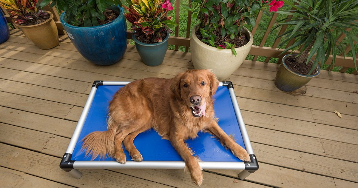 Kuranda Beds are elevated, cotstyle dog and cat beds with