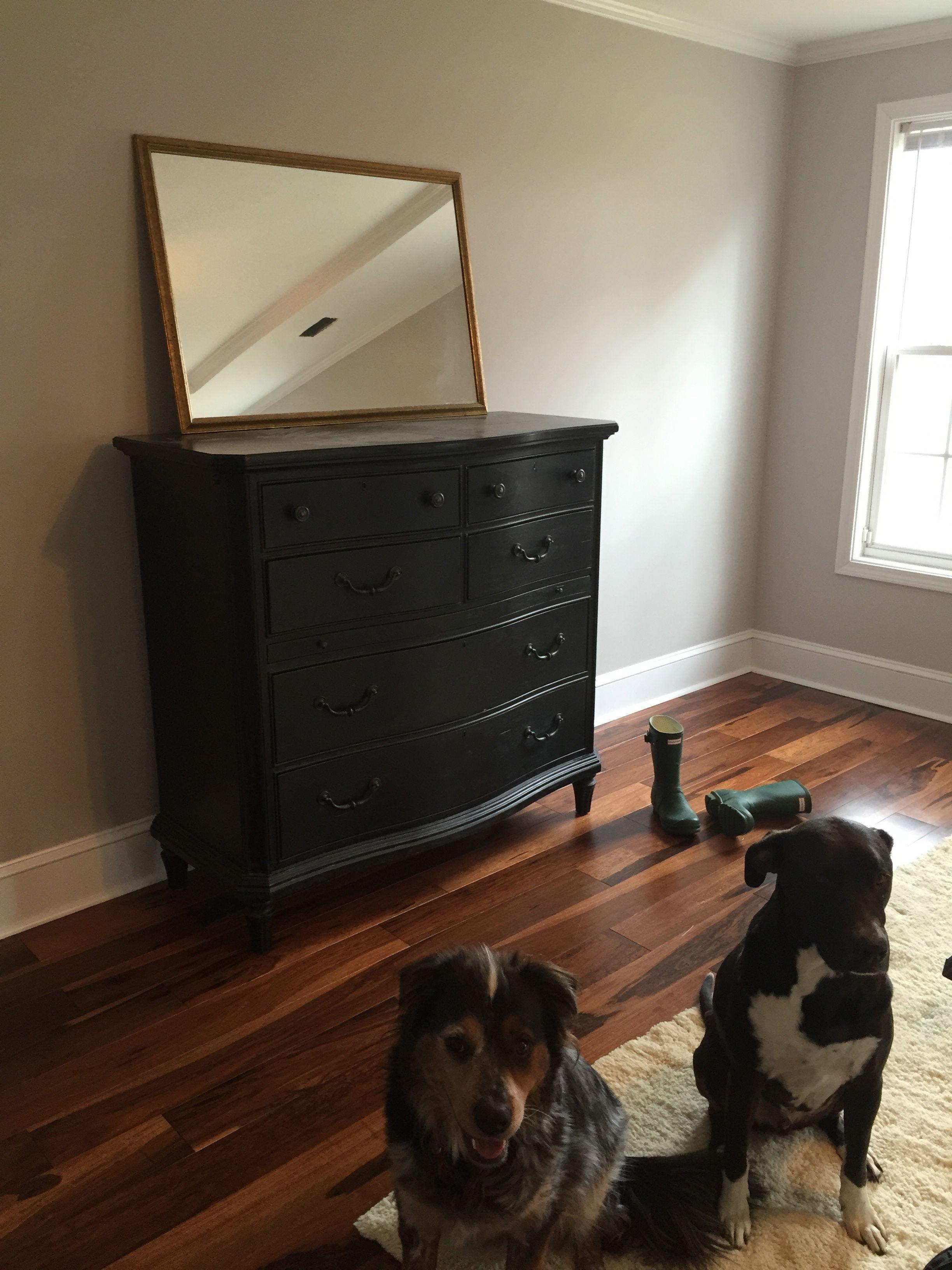 Cute Dogs Dark Hardwood Floors Brazilian Walnut Chocolate Stain Grey Paint Color