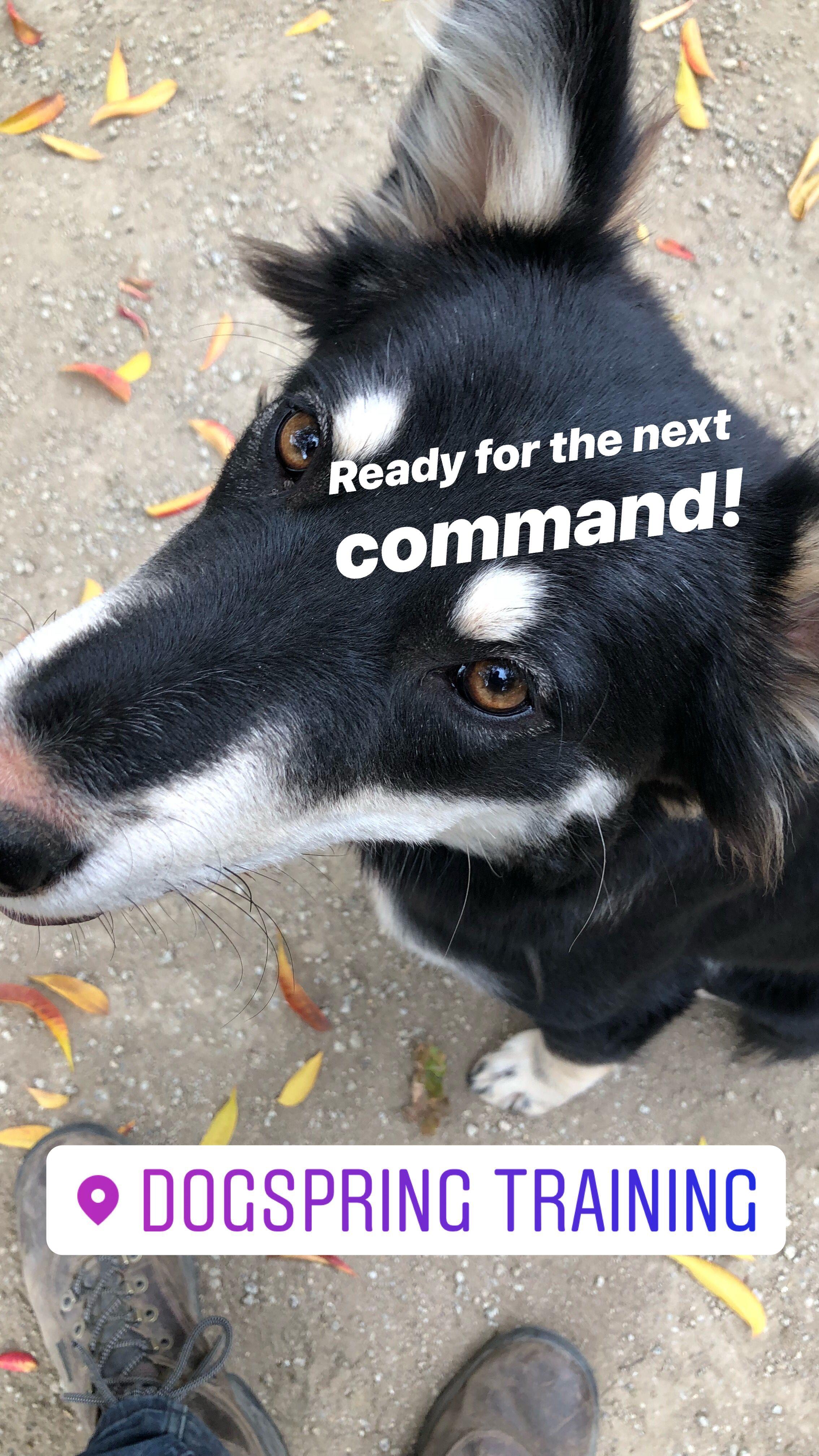 How Long Will It Take To Train My Dog Dog Training Dog