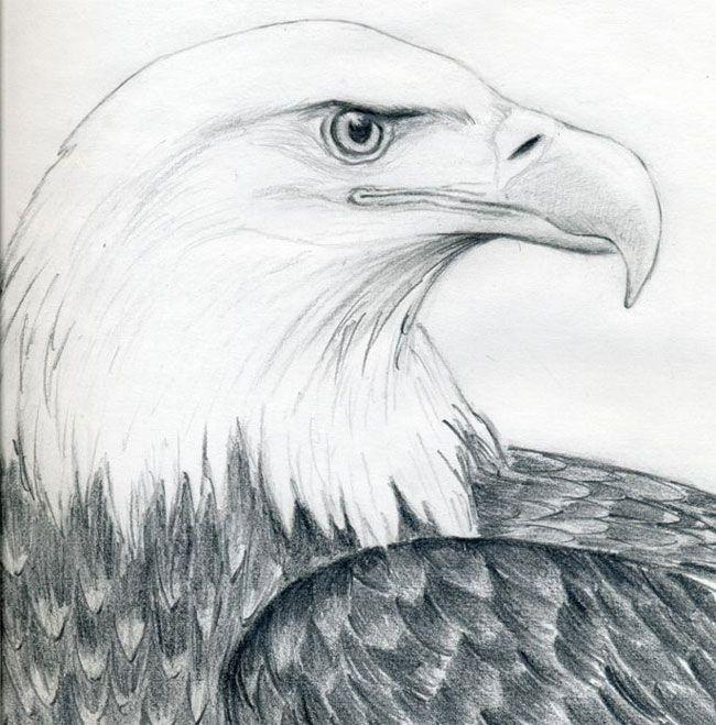 Как нарисовать голову орла карандашом поэтапно ...