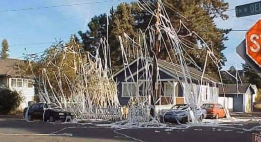 Neighbors House Got Tp D Last Night And Now It S Listed On Zillow For 12 5 Million Funny Lol Memes Funnymemes Bestofreddit In 2020 Night Zillow Graphic Image
