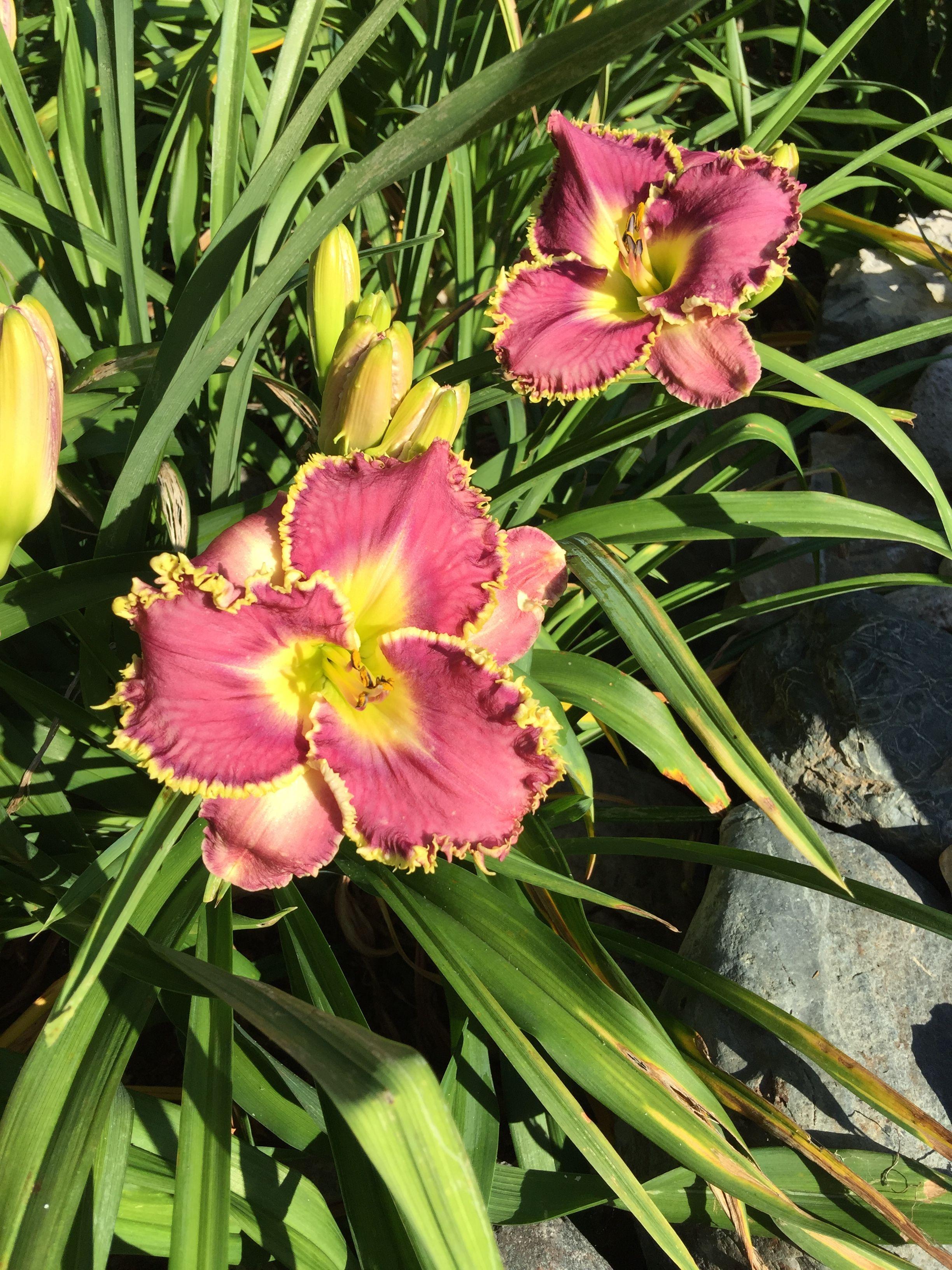 Pin by laurie kember on our garden photos garden photos