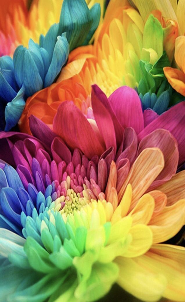 It S A Colorful Life Floral Wallpaper Iphone Flower Iphone Wallpaper Rainbow Flowers Iphone colorful flower wallpaper