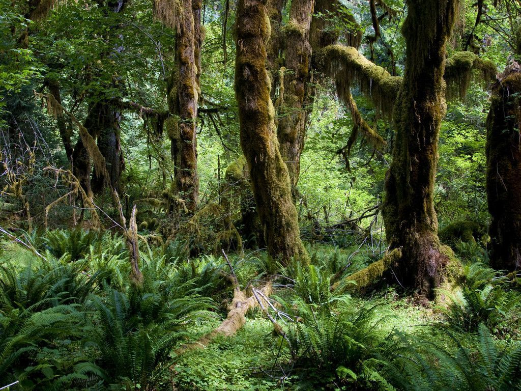 Mossy Amazon Jungle Trees Jungle Images Jungle Tree