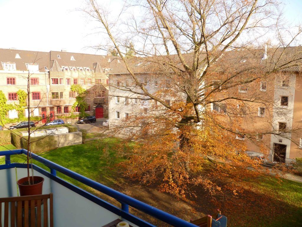 Herbst hat die Blätter gelb gefärbt! Köln Herbst