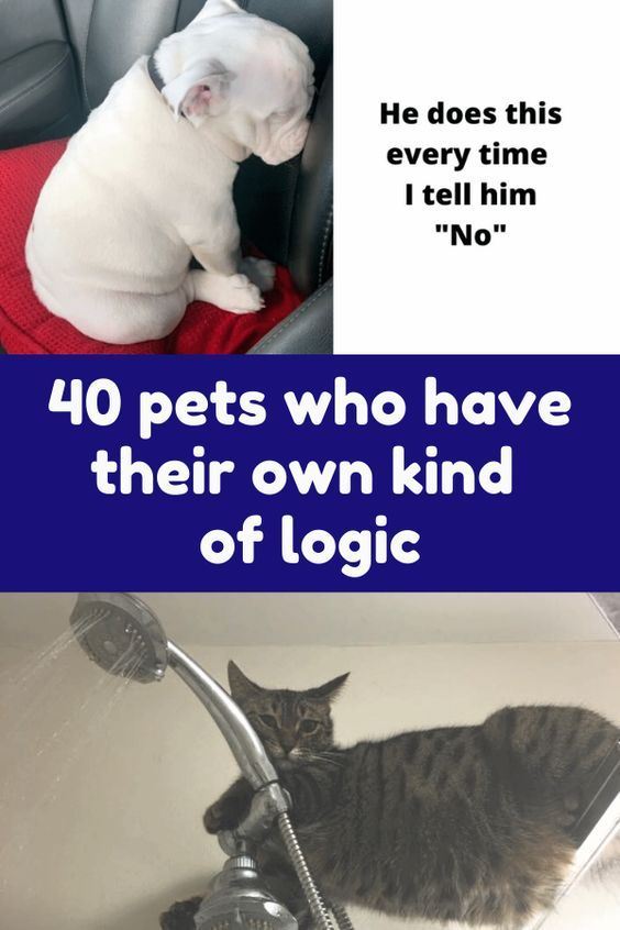 40 Pets Who Have Their Own Kind Of Logic In 2020 Pets Funny Animals Fun Facts