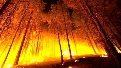 Quedar atrapado por un incendio es una de las situaciones de supervivencia más extremas. ¿Sabes como actuar?
