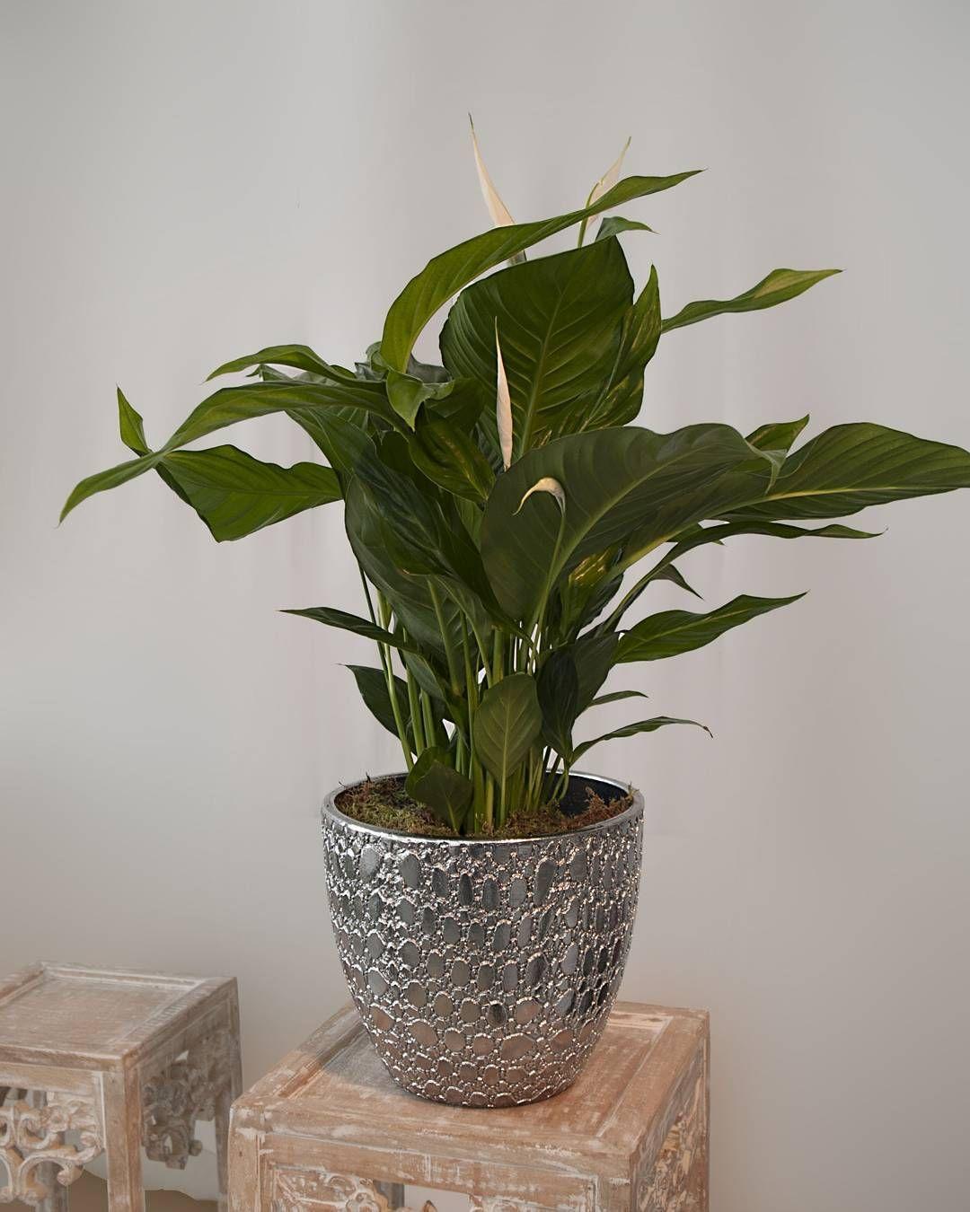 maceta par s cer mica paris pot ceramics decoracion decor home homeandgarden florist. Black Bedroom Furniture Sets. Home Design Ideas