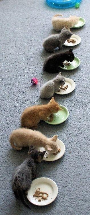 #chat  #monchat  #passionchat  #instachat  #jaimemonchat  #adorable  #catlover  #meow  #kitten  #kitties  #ilovemycat  #catpassion  #cat  #catpic  #catsagram  #cute  #mignon #monchatdore.com MonChatDoré?? monchatdore.com