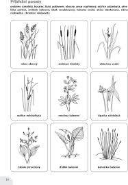 Vysledek Obrazku Pro Rostliny Rostouci U Rybnika Pracovni List U