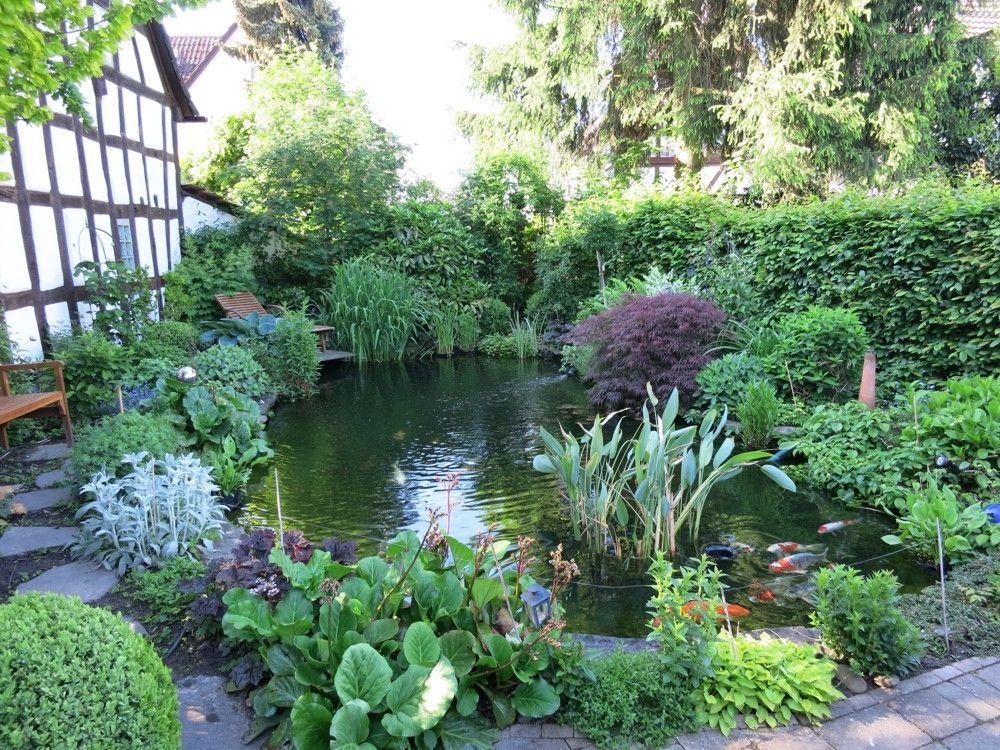 gartenteich, goldfische, biotopfische, koi, pflanzen für den, Garten ideen