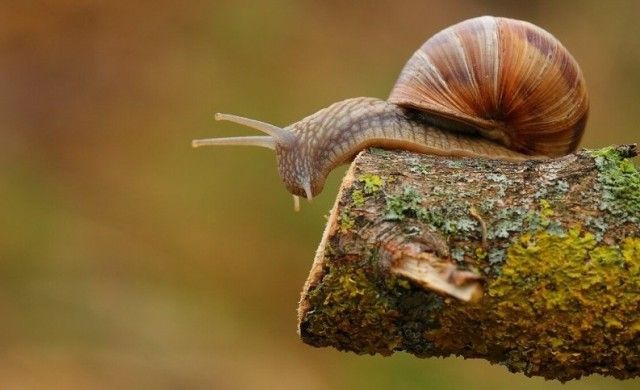 Interesting Facts How Long Do Snails Sleep ? (MISYTERY SOLVED