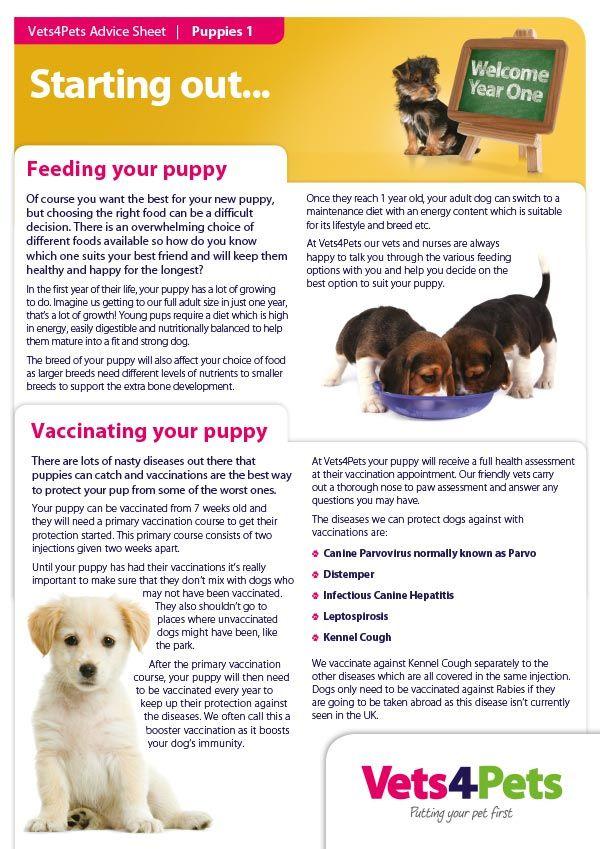Vets4pets School Campaign Tpa Creative School New Puppy