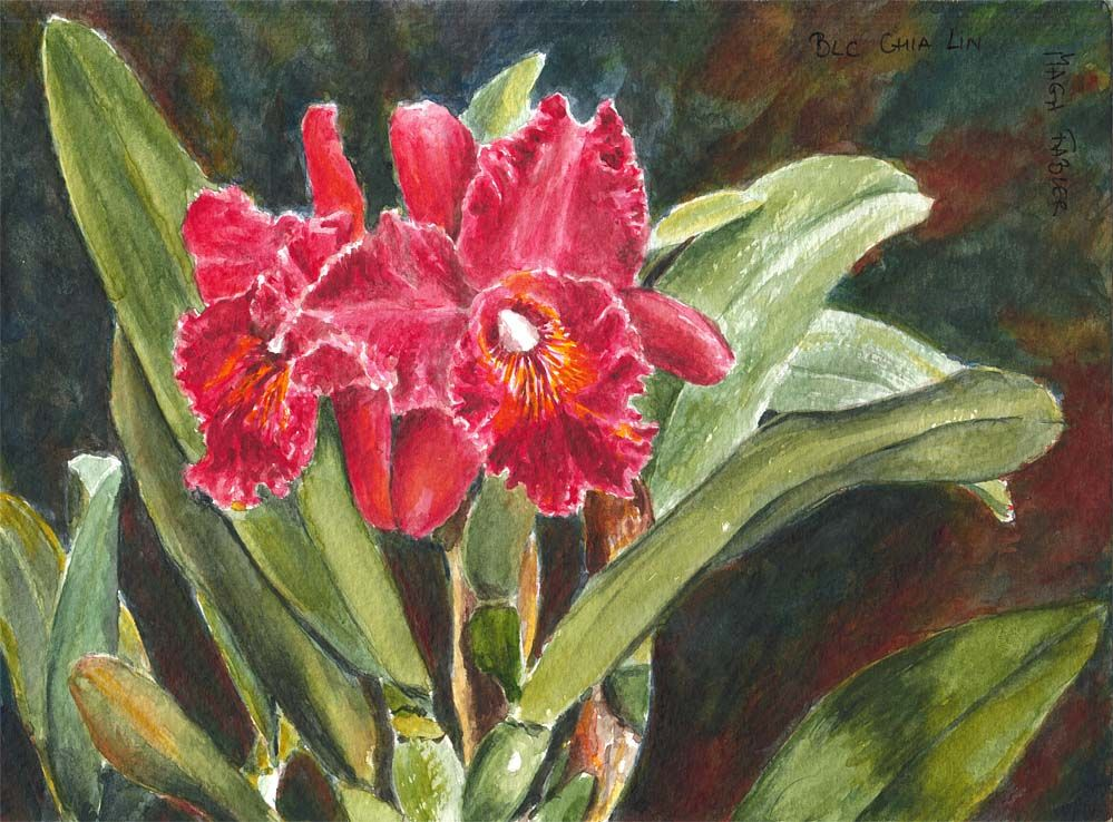 Brassolaeliocattleya Chia Lin, orchid by Maga Fabler; watercolor