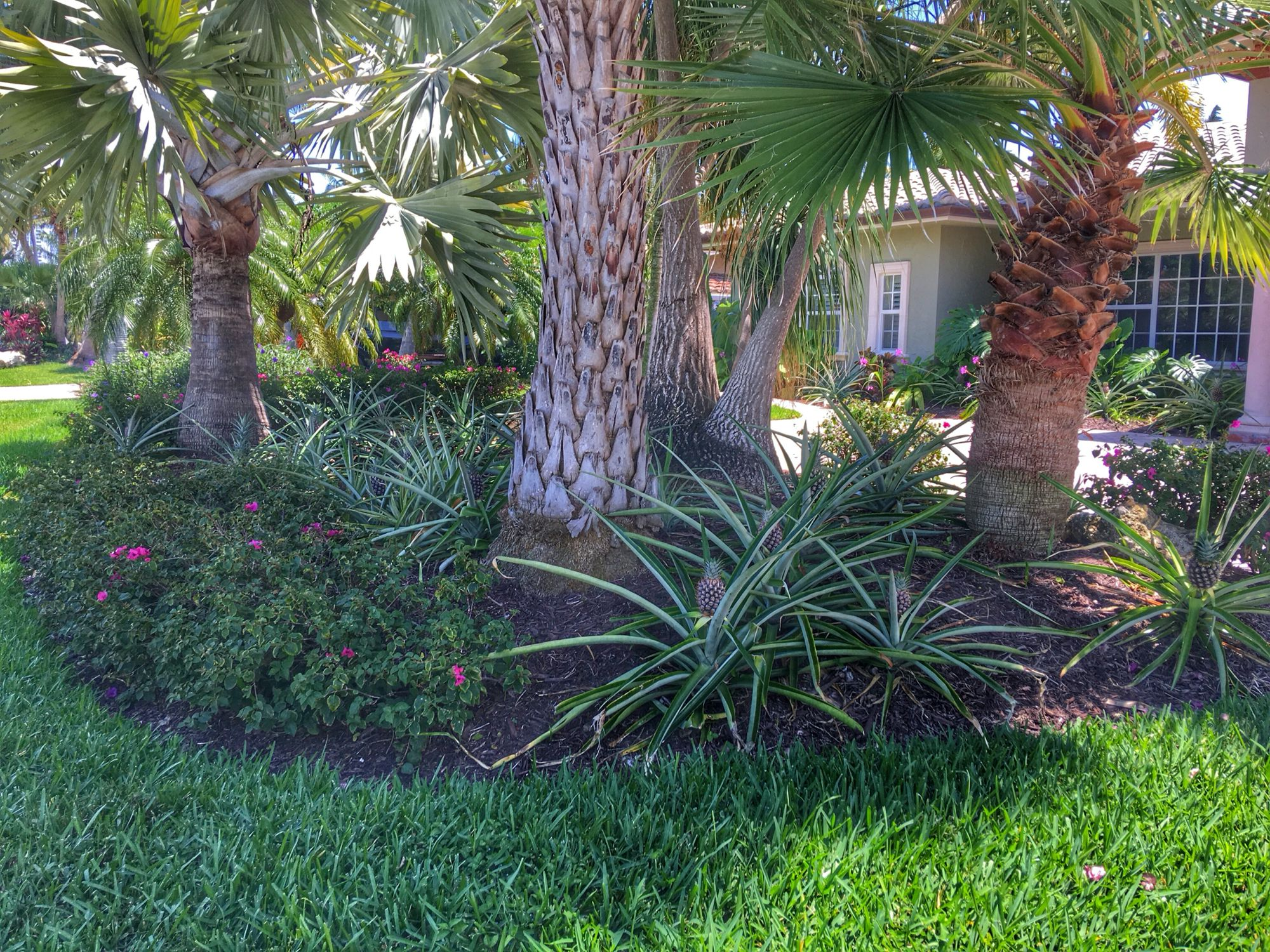 pineapple landscaping throughout the entire front yard  this is my plan for my house