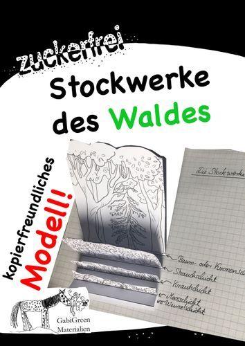 Stockwerke des Waldes Modell Lapbook