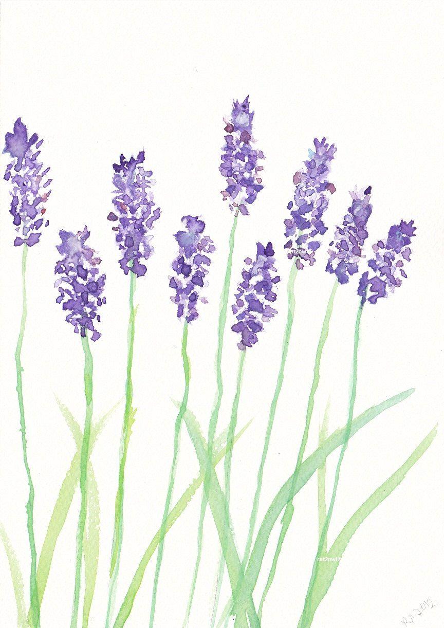 Watercolor Paintings Of Lavender Lavender Watercolor
