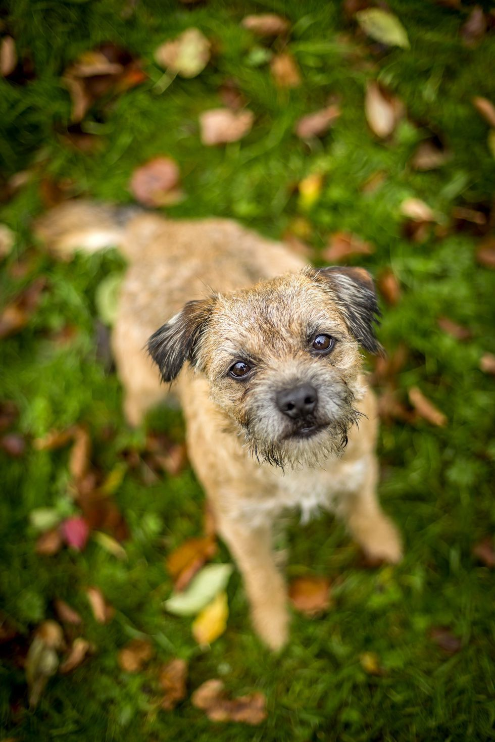 Cute Dogs That Won T Shed All Over Your House Terrier Dog Breeds