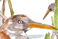 Tom Bingham Illustration