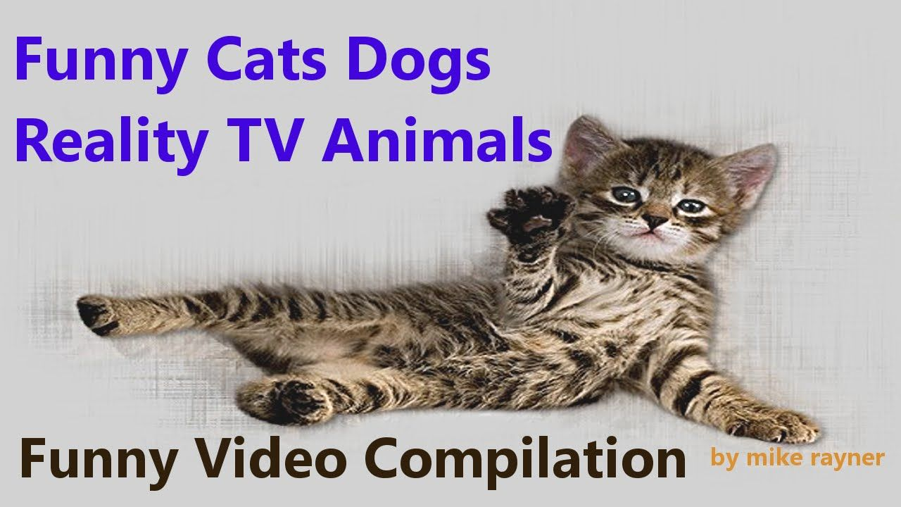 Funny Cats Dogs Animals Best Ever Funny Cute Pets pilation