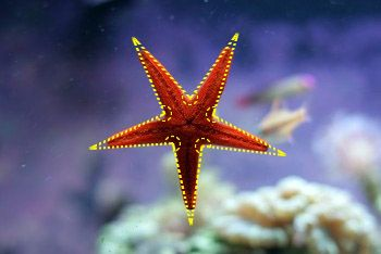 Starfish Real Life Example Of Concave Polygon Math Core Concepts