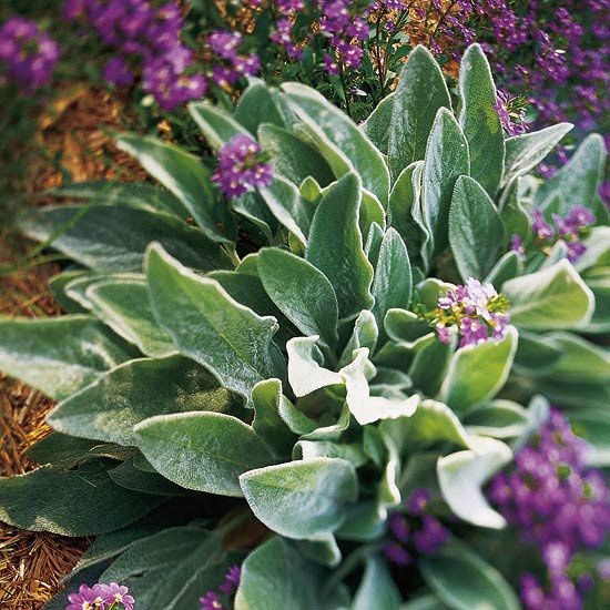 These 30 Plants Are The Easiest Groundcovers For Your Yard Plants Ground Cover Flower Garden,Tall Bedside Cabinets Uk