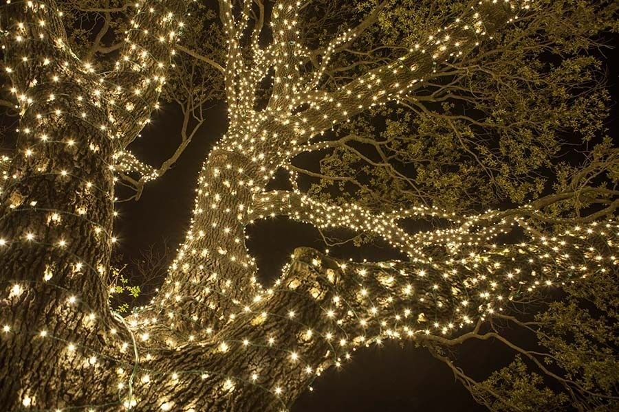 Dallas Landscape Lighting Gallery | Houston Lighting Gallery