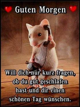 ein Bild für's Herz 'Will dich nur kurz fragen.jpg – One of 1548 files in the category & # good morning pictures & # on FUNPOT.