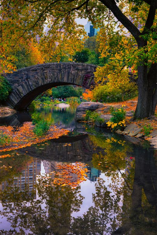 """Central Park, New York: """"The Pond""""  This pond is in the Southeast corner of the park (roughly near the Central Park Zoo)."""