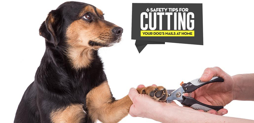 Pin on Best Dog Grooming Tools