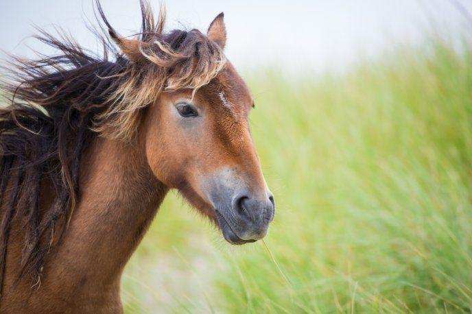 Pin On Beautiful Horses Brown horse wallpaper hd