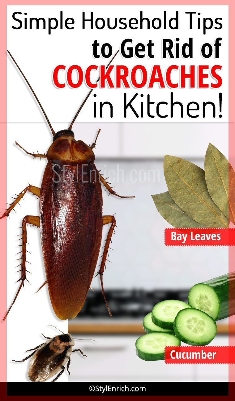 How To Get Rid Of Cockroaches In Kitchen Using Simple Household Tips Household Hacks Cockroaches Rid