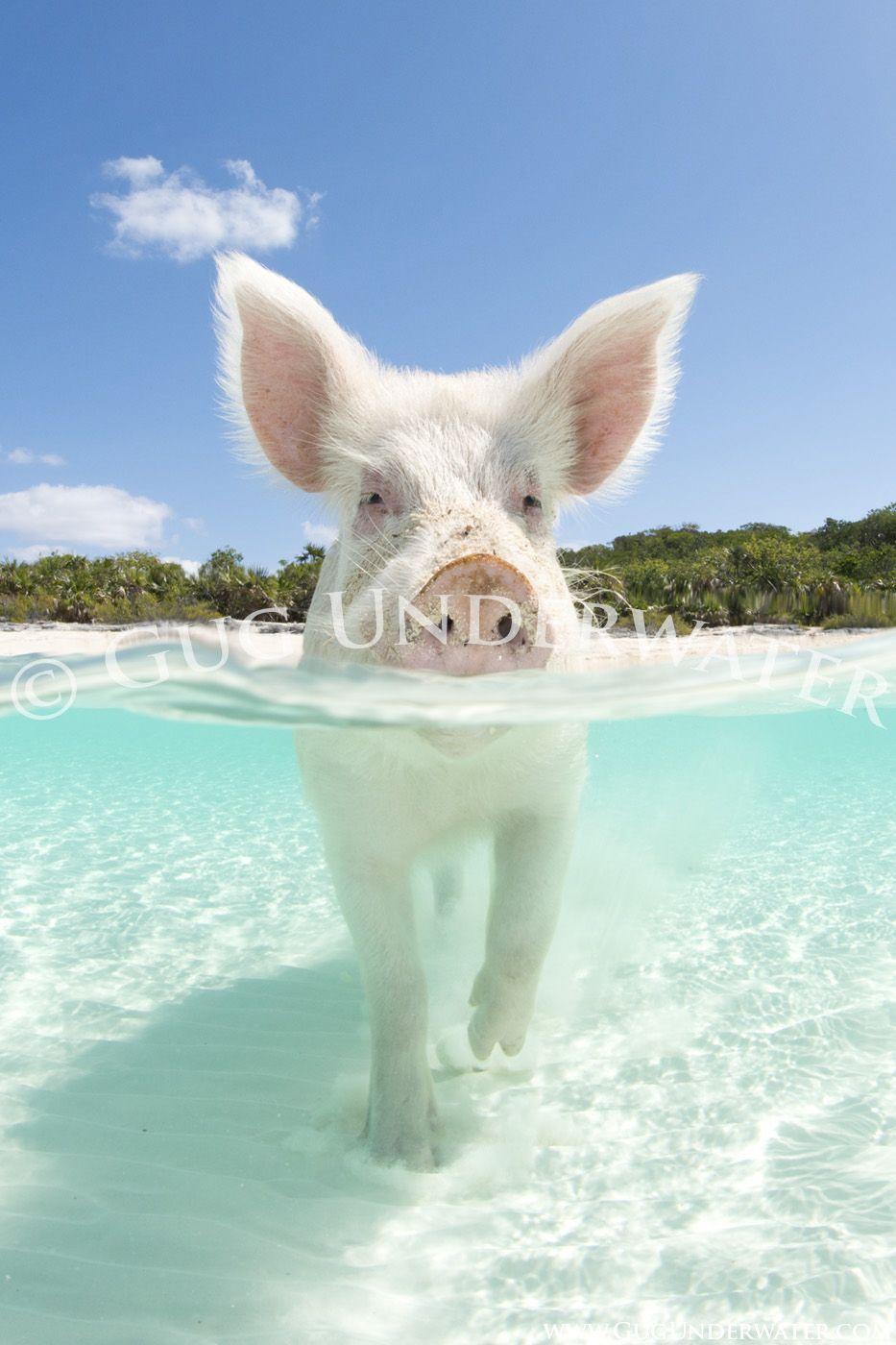 Hog heaven animals beautiful cute pigs cute animals