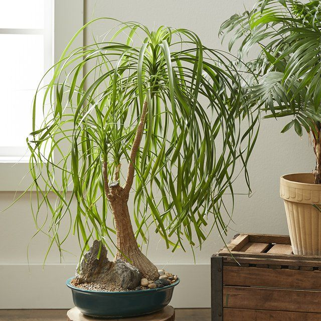 23 of the Easiest Houseplants You Can Grow Plants