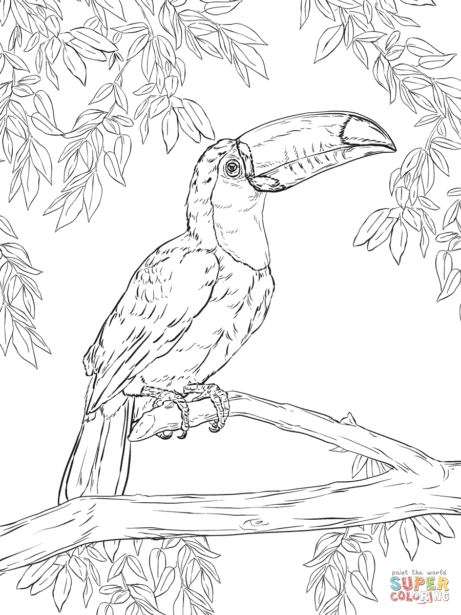 Marvelous Toco Toucan Coloring Page | SuperColoring.com