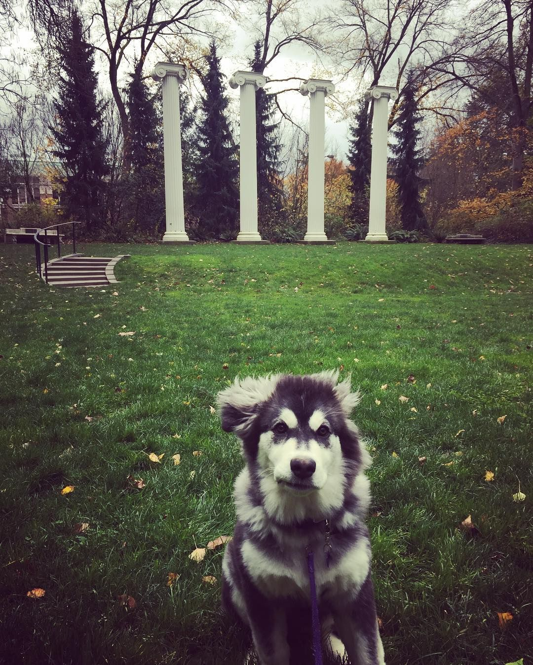 Pin By University Of Washington On Top Dawgs Animals Beautiful
