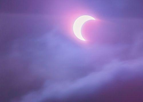 Baby lavender moon. ❤