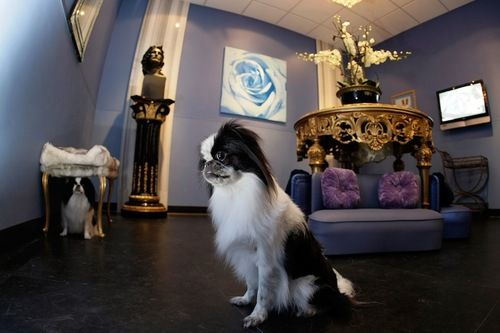 Get Rover A Seaweed Body Wrap At The Poshest Of Dog Hotels Dog Hotel Luxury Dog Kennels Pet Hotel