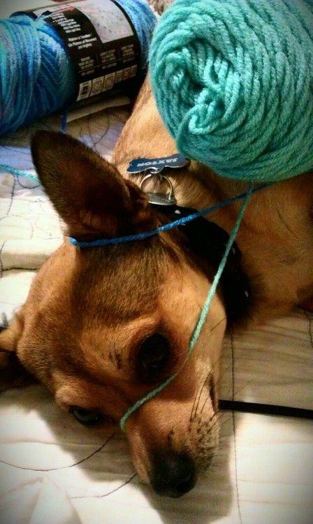 Jaxson + me crocheting = this Pug mix, Terrier, French