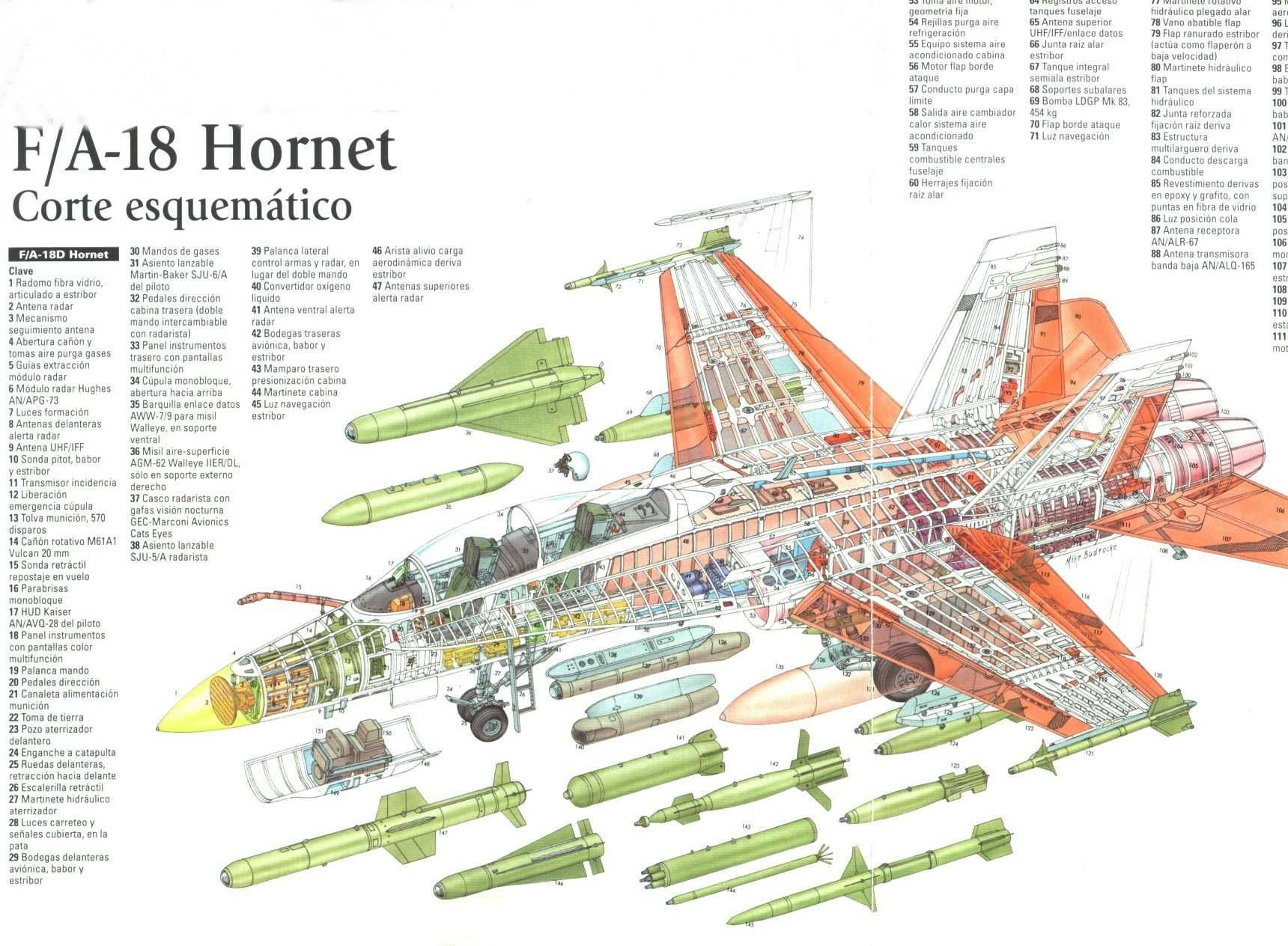 hight resolution of hornet