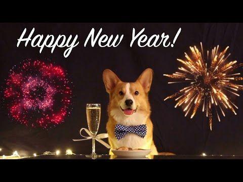 Have A Happy New Year Topi The Corgi Youtube Corgi Welsh