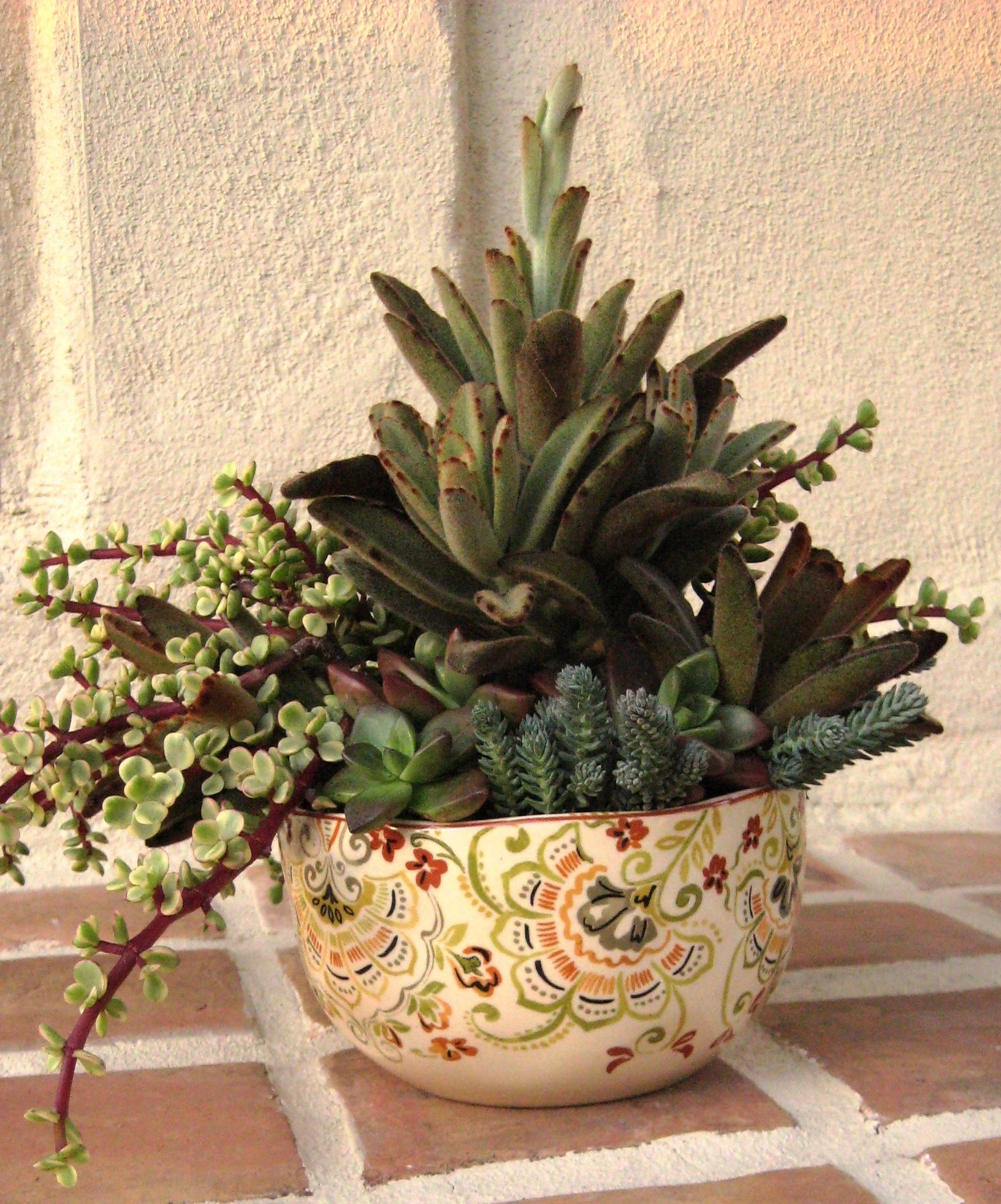Design By Cindy Davison Of The Succulent Perch Succulents