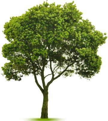 the hidden life of trees pdf free download