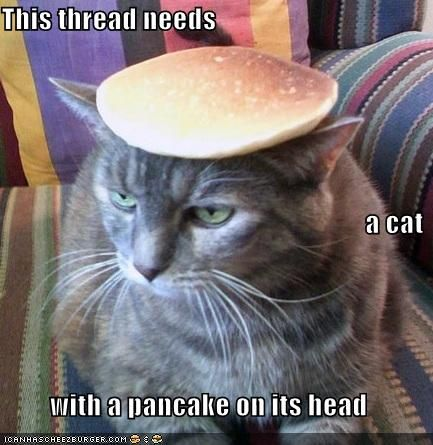 This thread needs a cat with a pancake on its head   Fluffy vegan ...