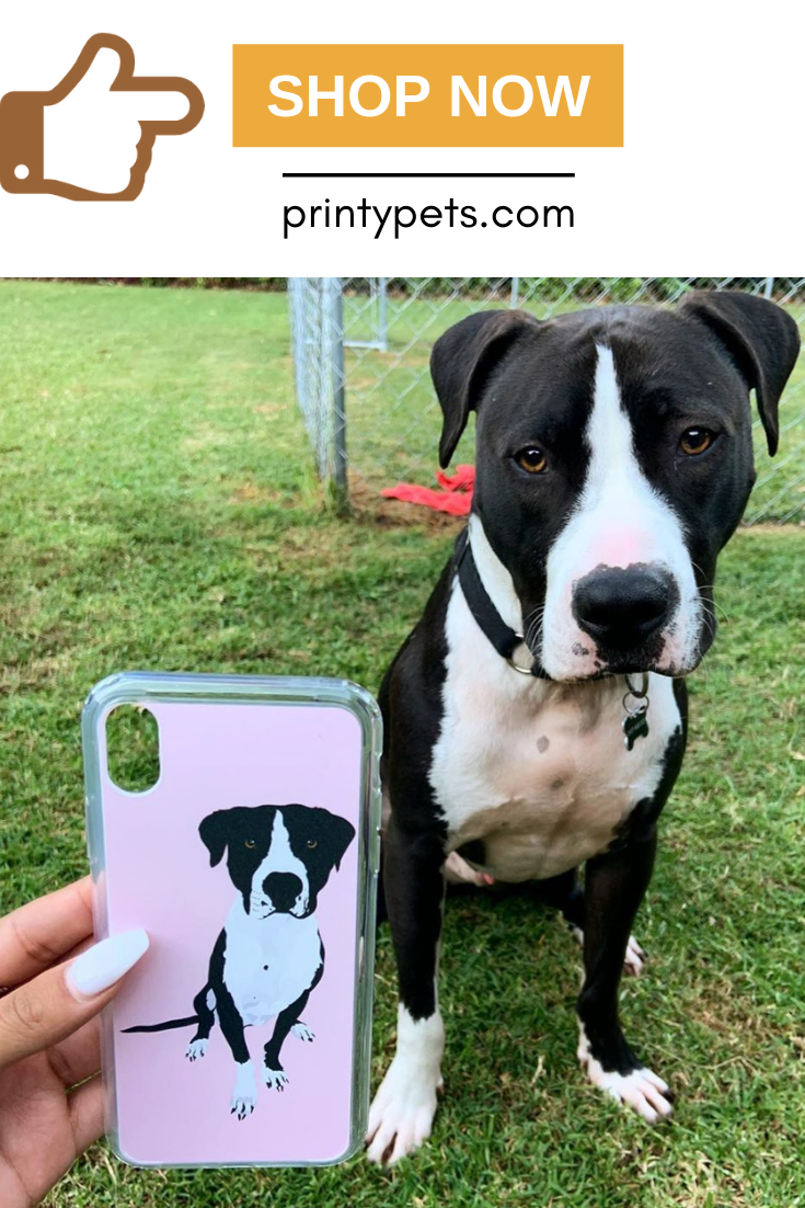 This Is Just Too Sweet Armin The American Staffy Said Mums New Phone Case So She Can Carry Me Everywhere She Goes Printypet Phone Cases Iphone Phone Cases Pets